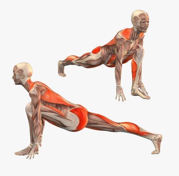 Mobilidade de Flexibilidade3